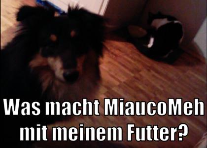 miaucomehv2