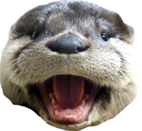 otter_laugh