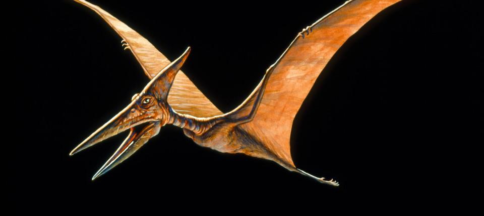 quetzalcoatlus-war-mit-einer